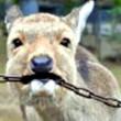 گوزن گونههای جانوری را از زیستگاههای اصلی خود خارج نکنید