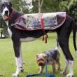 معرفی روشی جدید برای تشخیص بیماری لیشمانیوز در سگ سانان