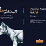 کالبدشناسی تصویری گربه