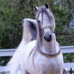 برخی از مهمترین و شایع ترین بیماری های اسب