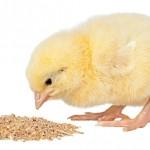 افزودنی های خوراکی نو پدید و موارد مصرف عملی آنها در طیور