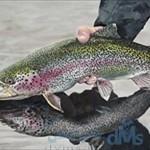 ایران رتبه اول تولید ماهی های سردابی در جهان
